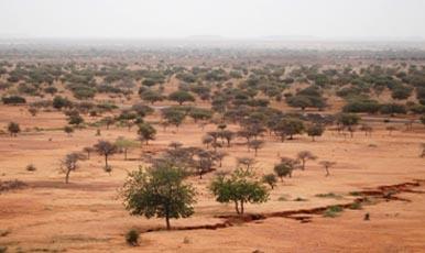 জলবায়ুর পরিবর্তনে সবুজ হয়ে উঠছে আফ্রিকার সাহেল মরুভূমি