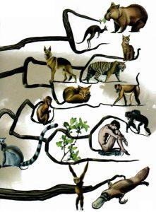 দলের প্রাণীর জিনের মধ্যে খুব বেশি ভিন্নতা চলে আসলে তারা স্বতন্ত্র প্রজাতি বলে গণ্য হয়। Credit: Dave McKean