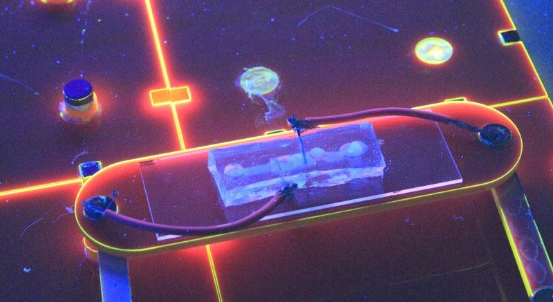 E. coli ব্যক্টেরিয়াকে বৈদ্যুতিক বাতিতে রূপান্তর
