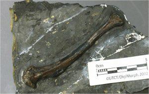 Tingmiatornis arctica পাখির জিবাশ্ম