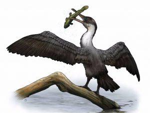একজন শিল্পীর কল্পনায় Tingmiatornis arctica