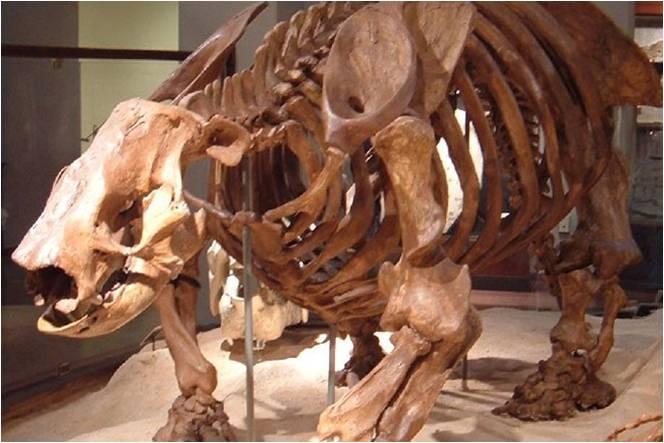 ৫০০ বছরে মানবজাতির কারণে বিলুপ্ত হয়েছে তিনশরও বেশী বন্য প্রজাতি