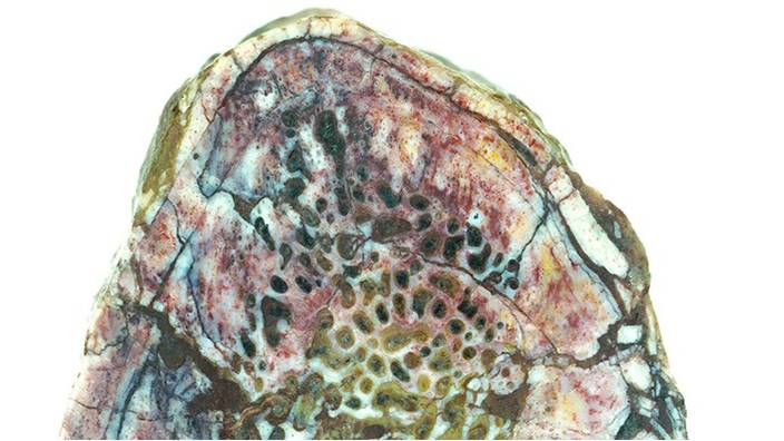 ১৯৫ মিলিয়ন বছর আগের ডায়নোসরের হাড়ে নরম টিস্যুর সন্ধান