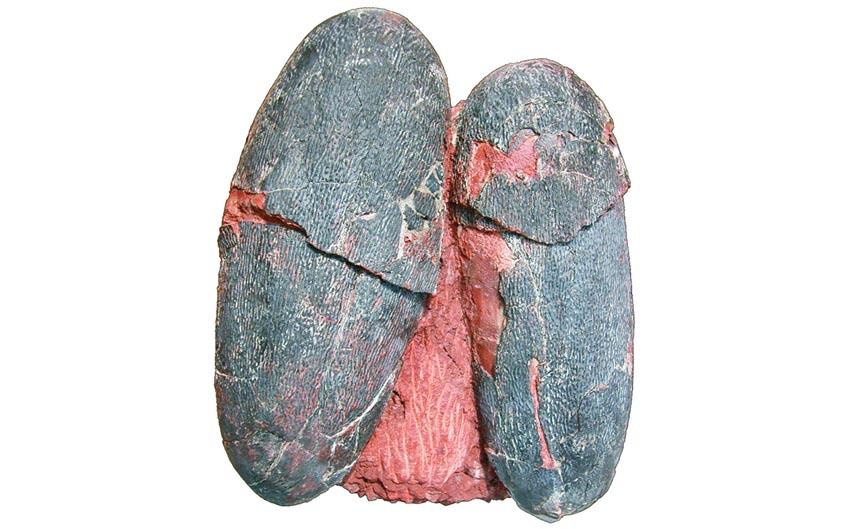 সাড়ে ছয় কোটি বছর আগের ডায়নোসরের নীলাভ সবুজ ডিম